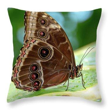 Owl Butterfly Throw Pillow