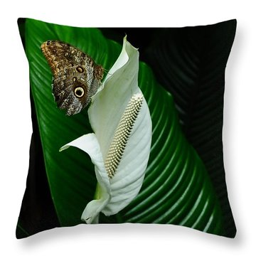 Owl Butterfly On Calla Lily Throw Pillow by Elaine Manley