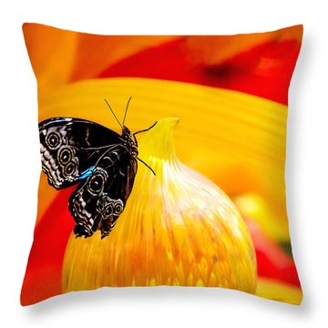 Owl Eye Butterfly On Colorful Glass Throw Pillow