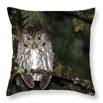 Owl Northern Pygmy  Throw Pillow by Irina Hays