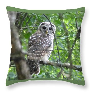 Owl On A Limb Throw Pillow by Donald C Morgan