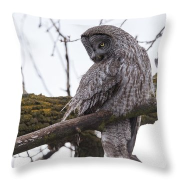 Owl Scowl Throw Pillow