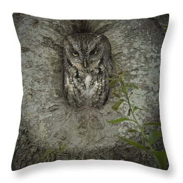 Screech Owl Stare Throw Pillow by D Wallace