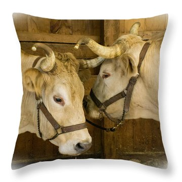 Oxen Team Throw Pillow