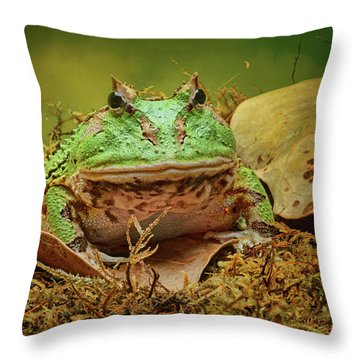 Throw Pillow featuring the photograph Pac Man - Frog by Nikolyn McDonald