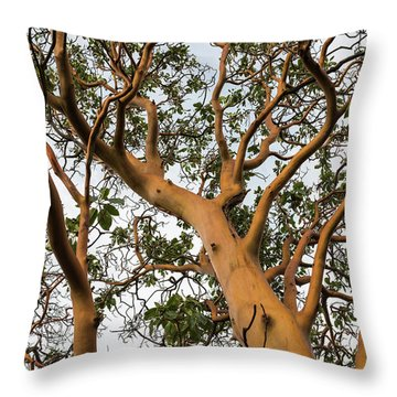 Pacific Madrone Trees Throw Pillow