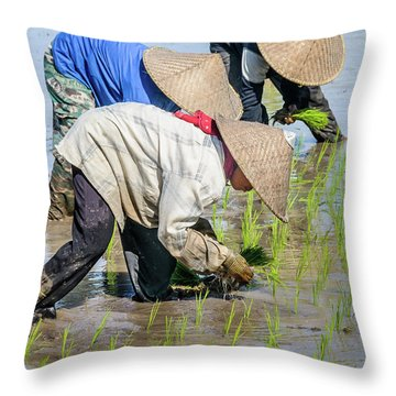 Paddy Field 2 Throw Pillow by Werner Padarin