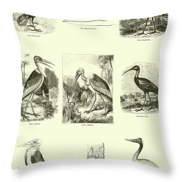 Page From The Pictorial Museum Of Animated Nature  Throw Pillow by English School