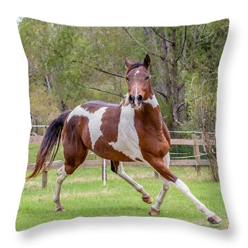 Paint Mare In Field Throw Pillow