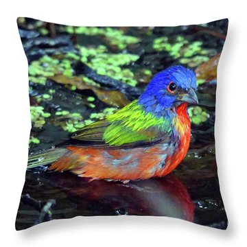 Painted Bunting After Bath Throw Pillow