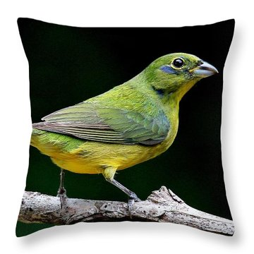 Painted Bunting - Second Year Male Throw Pillow