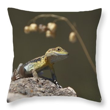 Painted Dragon Throw Pillow by Bill Robinson