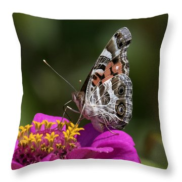 Painted Lady Throw Pillow by David Lester