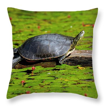 Painted Turtle On Log With Lily Pads Throw Pillow