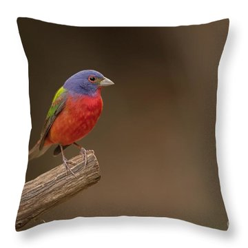 Painting The Hill Country Throw Pillow