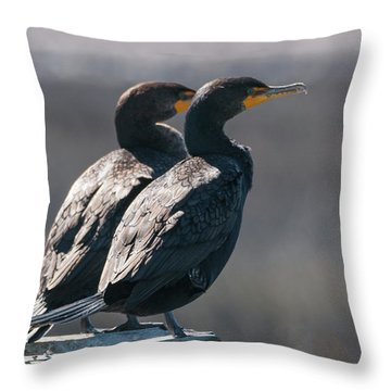 Pair Double-crested Cormorant 3 March 2018 Throw Pillow