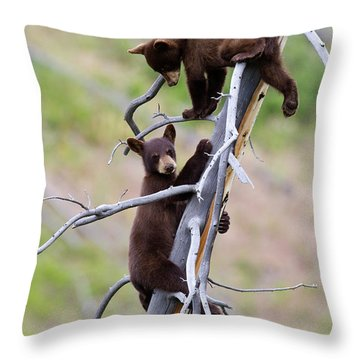 Pair Of Bear Cubs In A Tree Throw Pillow