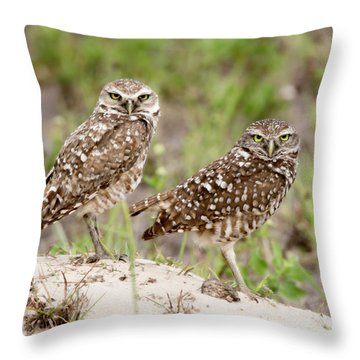 Pair Of Burrowing Owls Throw Pillow