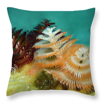 Throw Pillow featuring the photograph Pair Of Christmas Tree Worms by Jean Noren
