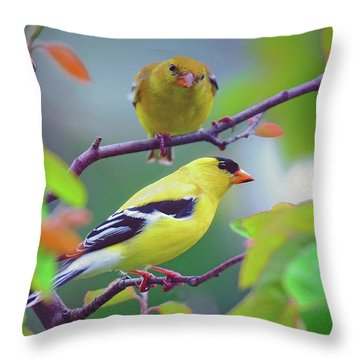 Throw Pillow featuring the photograph Pair Of Goldfinches by Rodney Campbell