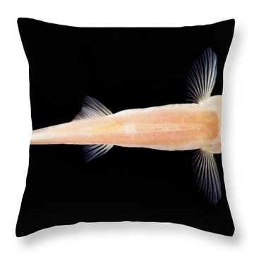 Palace Of The Dragon God Cave Loach Throw Pillow