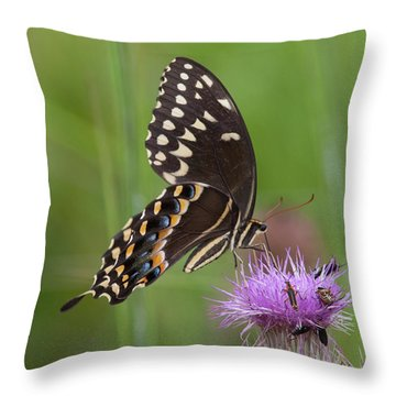 Palamedes Swallowtail And Friends Throw Pillow