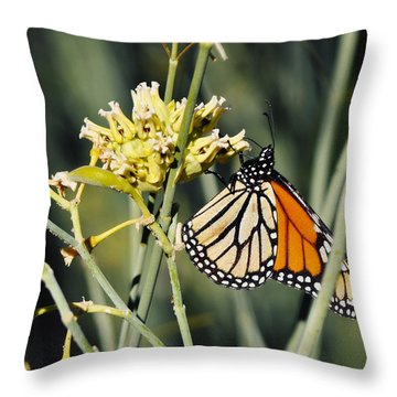 Throw Pillow featuring the photograph Palm Springs Monarch by Kyle Hanson
