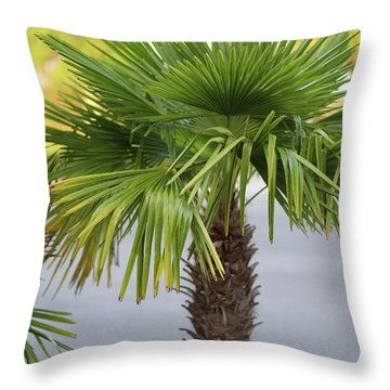 Palm Tree Just There Throw Pillow