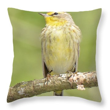 Palm Warbler Throw Pillow by Alan Lenk