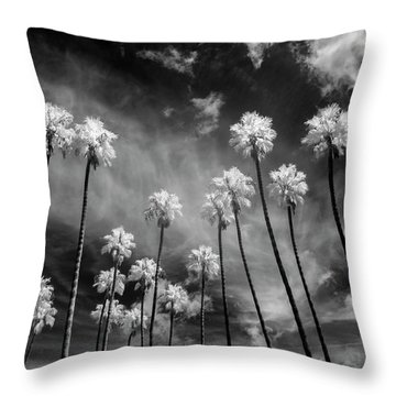 Palms Throw Pillow by Sean Foster