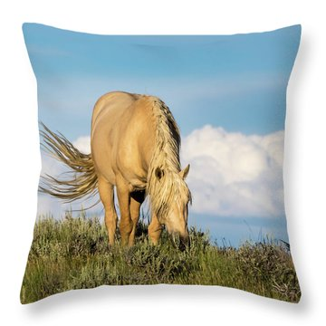 Palomino Wild Stallion In The Evening Light Throw Pillow