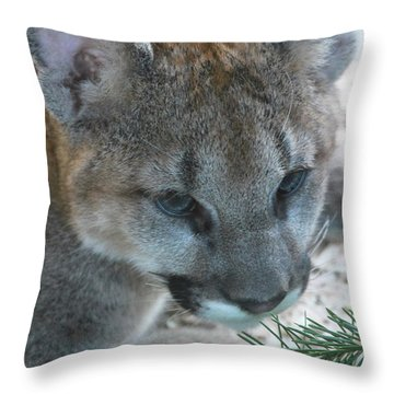 Throw Pillow featuring the photograph Palus by Laddie Halupa
