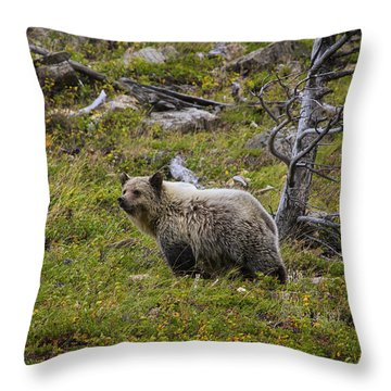 Panda In Many Glacier Throw Pillow