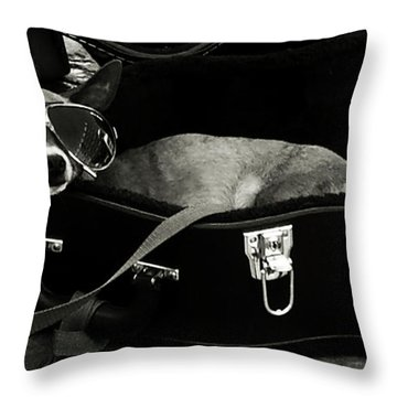 Panhandling Dog Throw Pillow by Julie Niemela