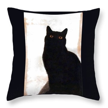 Panther The British Shorthair Cat Throw Pillow