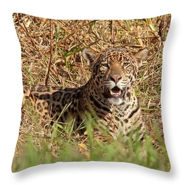 Jaguar In Grass Throw Pillow by Aivar Mikko