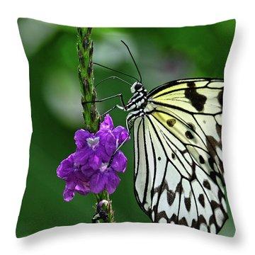 Paperkite Butterfly Closeup Throw Pillow