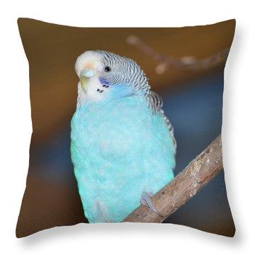 Parakeet Throw Pillow by Linda Geiger