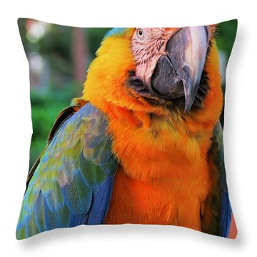 Parrot 3 Throw Pillow