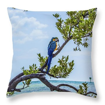 Throw Pillow featuring the photograph Parrot Above The Aqua Sea by Paula Porterfield-Izzo