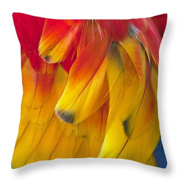 Throw Pillow featuring the photograph Parrot Feathers by Ken Barrett