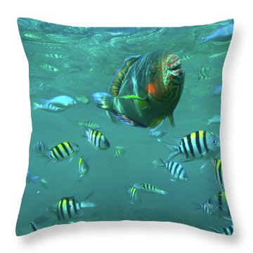 Parrot Fish Throw Pillow by Tim Fitzharris