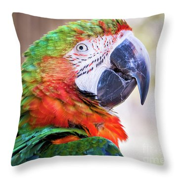 Parrot Throw Pillow by Stephanie Hayes