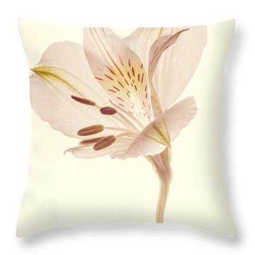 Pasae Alstroemeria By Flower Photographer David Perry Lawrence Throw Pillow by David Perry Lawrence