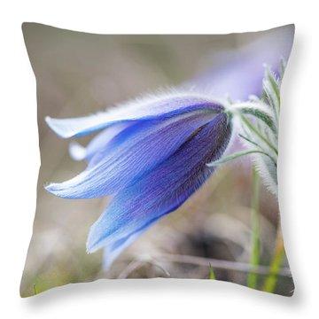 Pasque Flower's Silver Grey Hair Throw Pillow