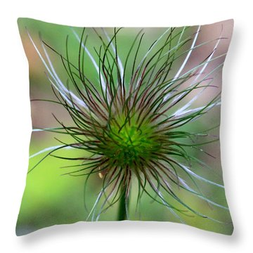 Pasque Fluff Throw Pillow