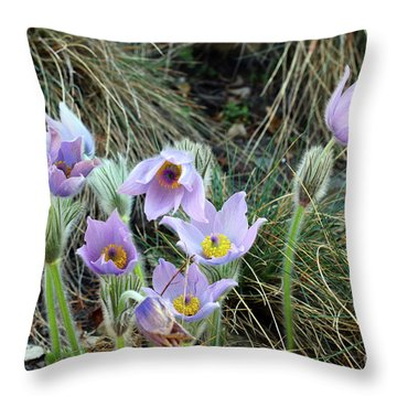 Throw Pillow featuring the photograph Pasqueflower by Michal Boubin