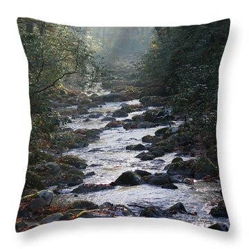 Passage Of Time Throw Pillow