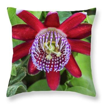 Passiflora Ruby Glow. Passion Flower Throw Pillow