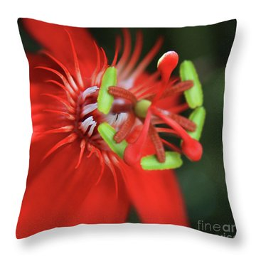 Throw Pillow featuring the photograph Passiflora Vitifolia Scarlet Red Passion Flower by Sharon Mau